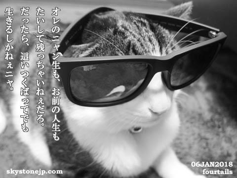 badcat2018.jpg