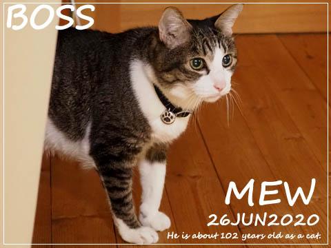mew2020.jpg
