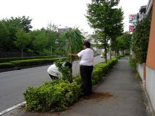 街路樹のある街並み