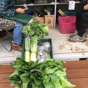 地元の野菜を使っています
