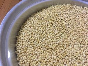 味噌づくりの大豆