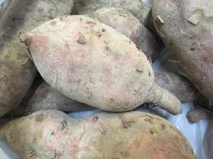 安納芋と紫芋