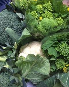 今週の地元野菜