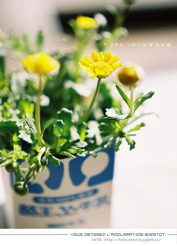 春の歌、ふたたび