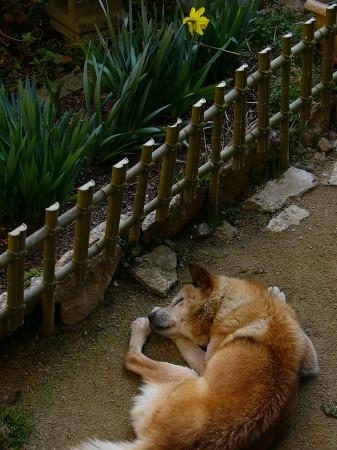 ぐっすり(2005年4月14日撮影)