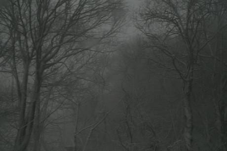 白い嵐、黒い森