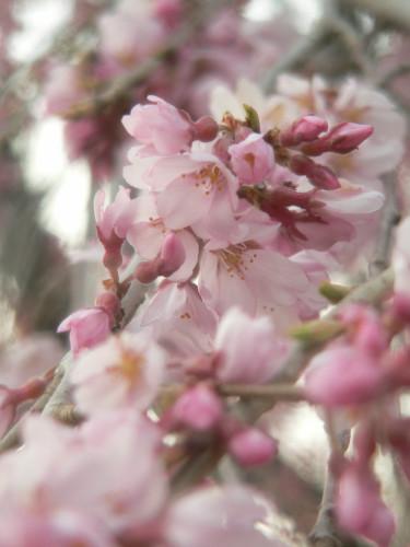 咲き初めし色