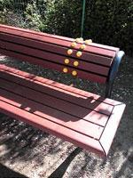 公園で見つけた健康的なベンチその1