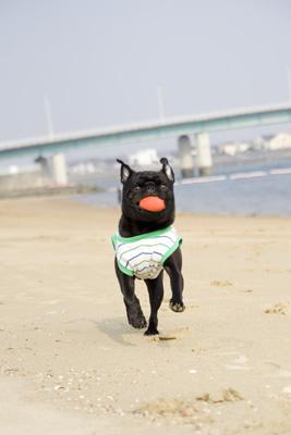 ボールとってこい遊び