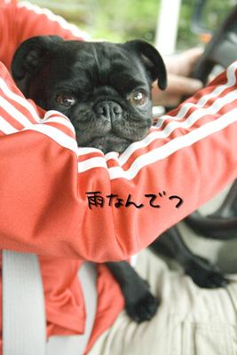 ぶー(○`ε´○)