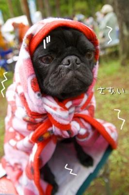 でも寒くてこうなりました。