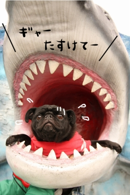 サメに食べられるチョコ