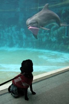 イルカに誘われるチョコ