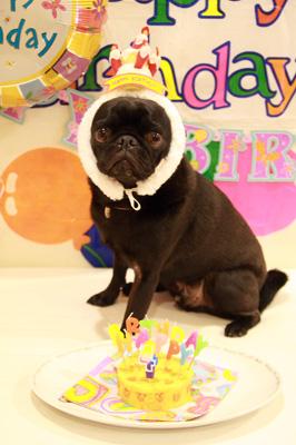 チョコのお誕生日♪