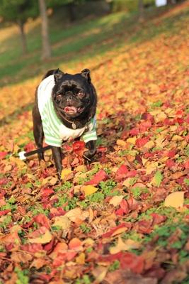 すごい紅葉のじゅうたん!