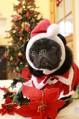 素敵なクリスマスをお迎えくださいね^^