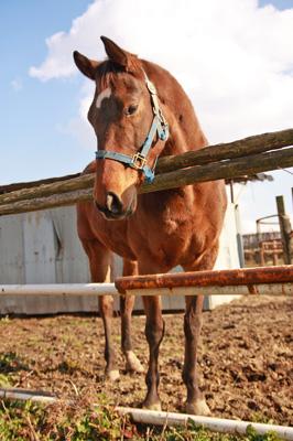 お馬さんです。目線の先にはチョコがいます。