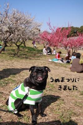 知多市の梅祭りにきました〜♪