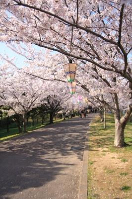 夜桜もよさそうです