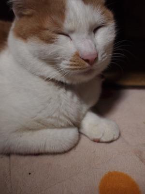 s-えま紫 契約 (29).jpg