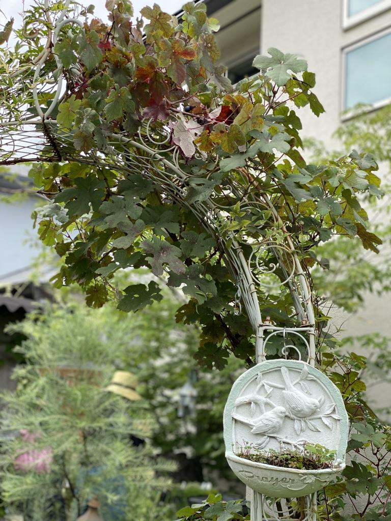 Gris Garden Plants °リガーデン ×ランツさんへ Coin De Nature
