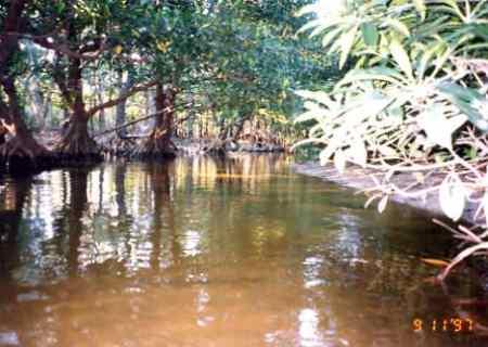 西表島のジャングルクルーズ