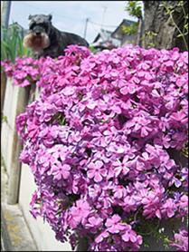 花とリリー