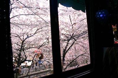 ソワレから桜並木を見る