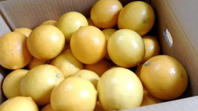 レモン 箱入り