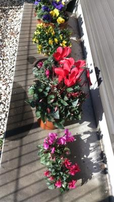 賞品の花たち