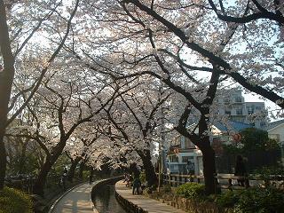 20090407a 桜