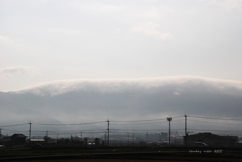 2015sakura2.jpg
