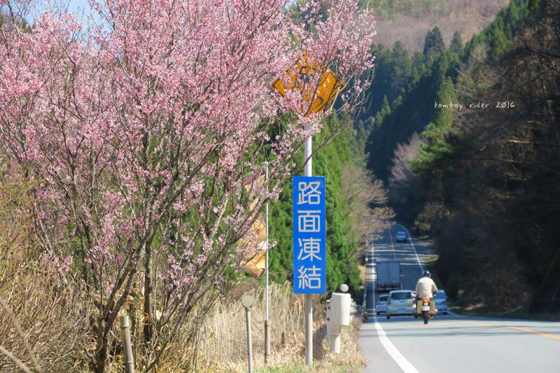 kujukokono34.jpg