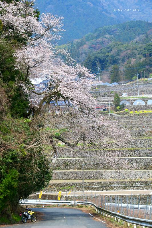 chikuiwa2.jpg