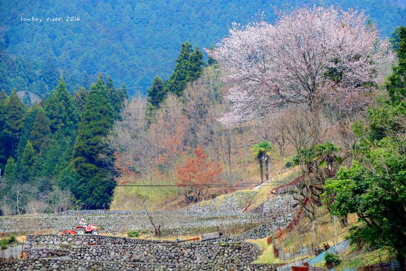 chikuiwa7.jpg