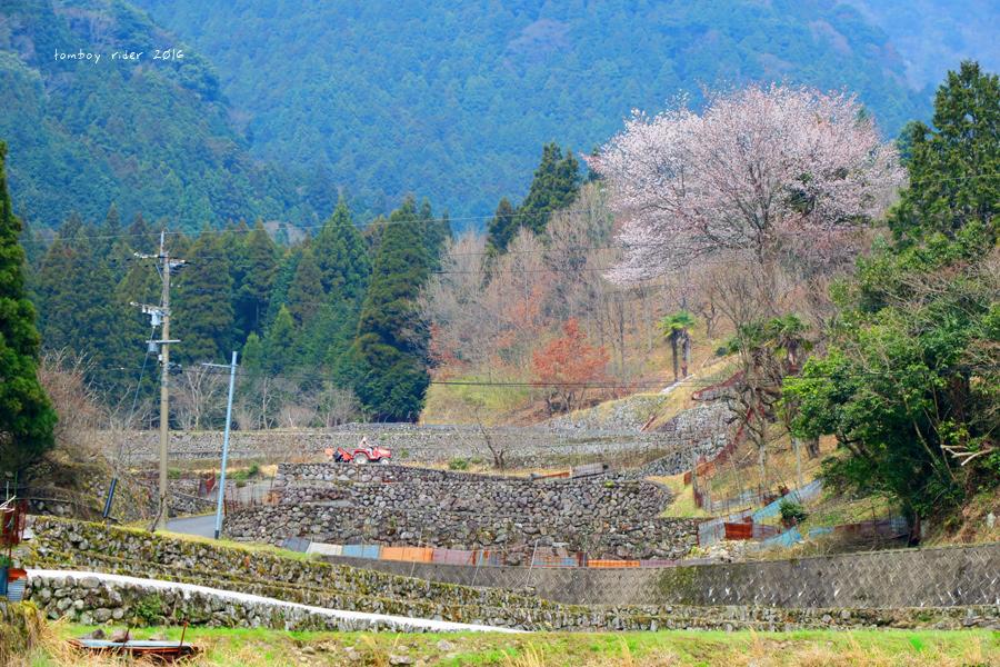 chikuiwa8.jpg