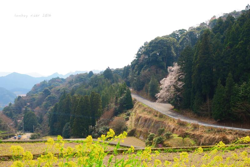 chikuiwa10.jpg