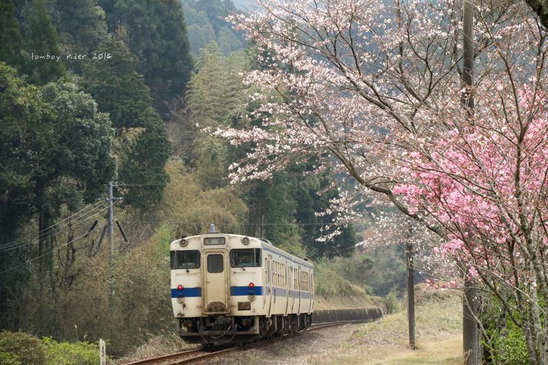 chikuiwa14.jpg