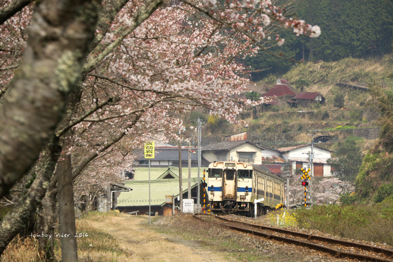 chikuiwa16.jpg