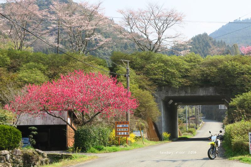chikuiwa18.jpg