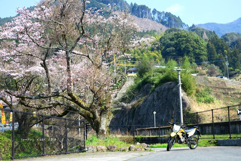chikuiwa21.jpg