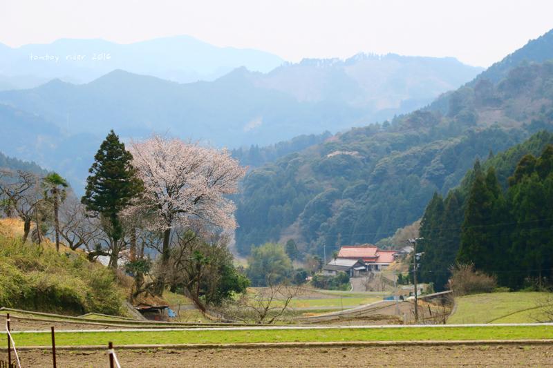 chikuiwa23.jpg