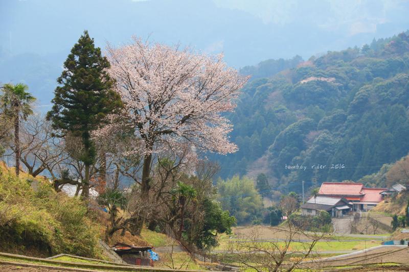 chikuiwa24.jpg