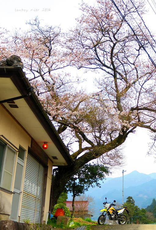 chikuiwa25.jpg