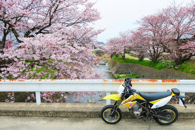 chikuiwa31.jpg