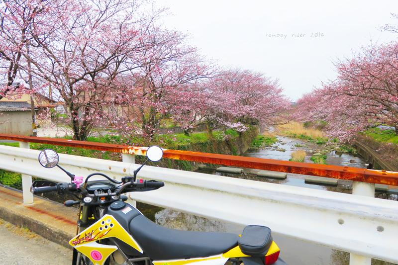 chikuiwa32.jpg