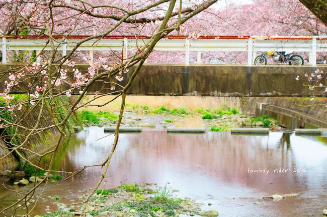 chikuiwa34.jpg