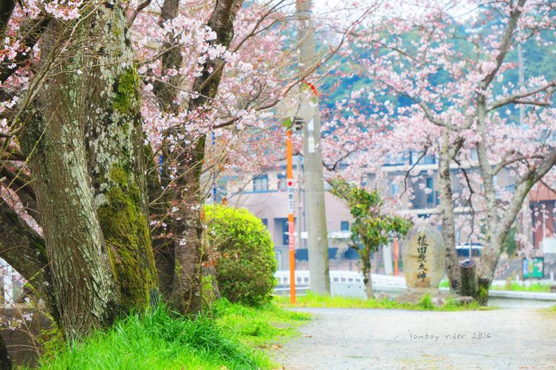 chikuiwa35.jpg