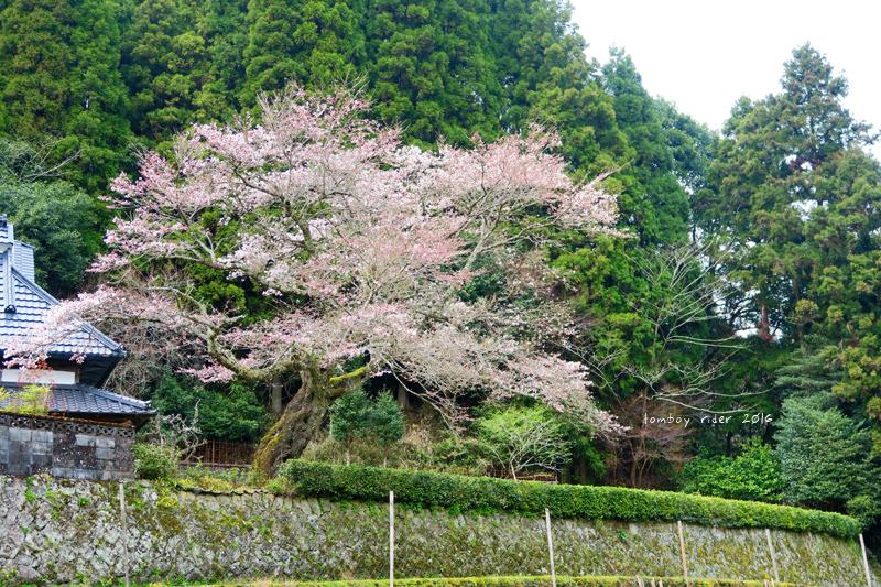 chikuiwa36.jpg