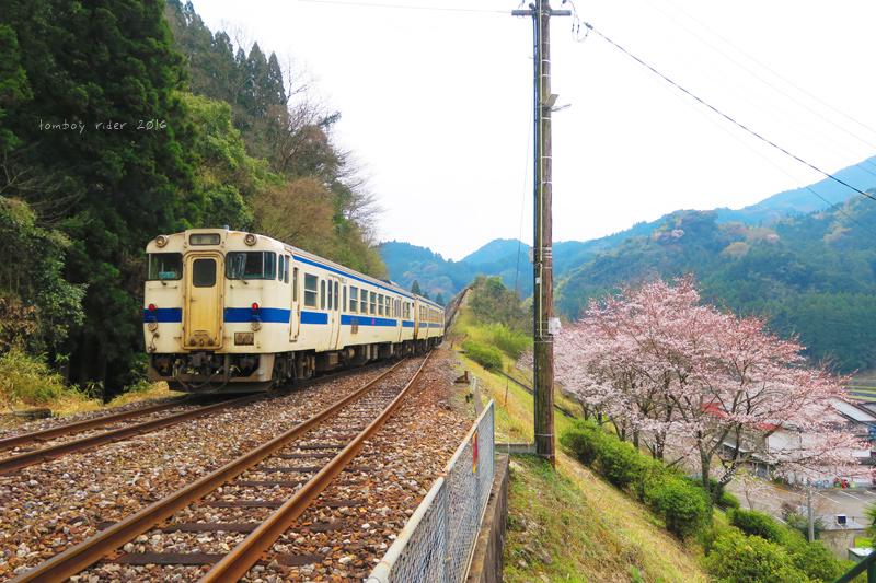chikuiwa41.jpg